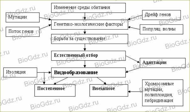 Тема 4.2. Современное эволюционное учение - 5
