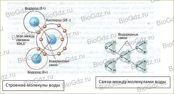 Тема 2.2. Химический состав клетки - 2