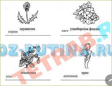 §24. Вегетативное размножение покрытосеменных растений - 1