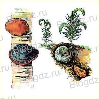 8. Организм как единое целое - 1