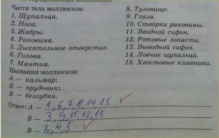 12. Классы моллюсков - 1