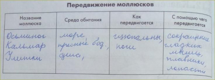 12. Классы моллюсков - 2
