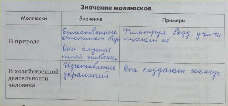 12. Классы моллюсков - 3