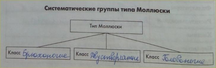 12. Классы моллюсков - 6