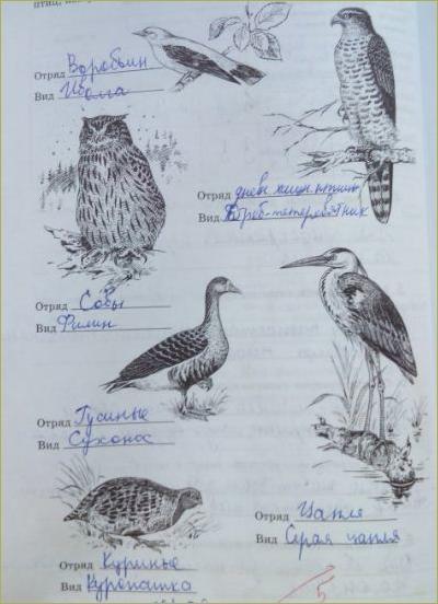 30. Отряды птиц. Воробьинообразные, Голенастые - 3