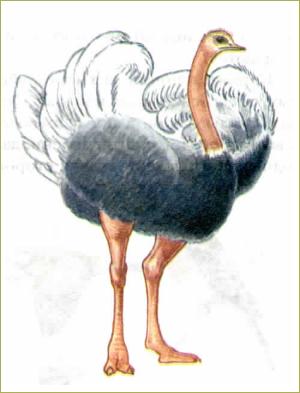 49. Многообразие птиц - 1