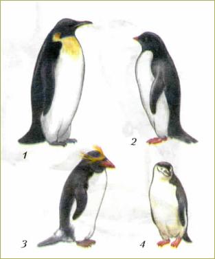 49. Многообразие птиц - 2