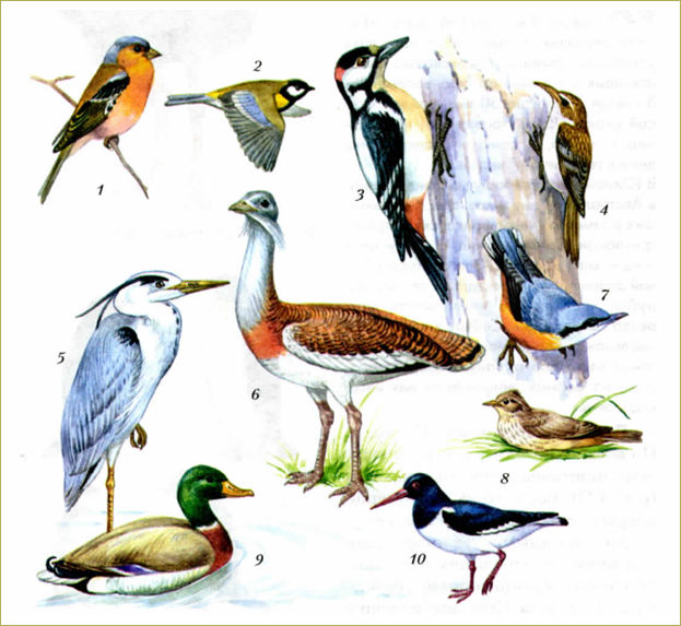 49. Многообразие птиц - 3