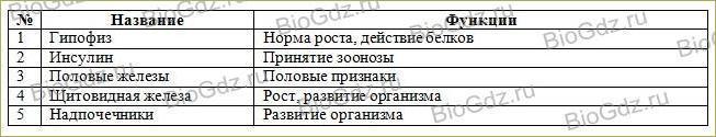 14. Эндокринная система - 2