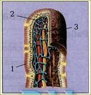 Пищеварение в кишечнике - 3